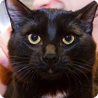 Adopt A Pet :: Rick - Irvine, CA