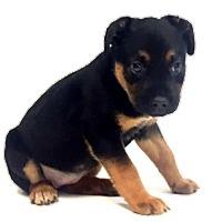 Adopt A Pet :: Twix - Show Low, AZ