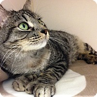 Adopt A Pet :: Miranda - Orange, CA