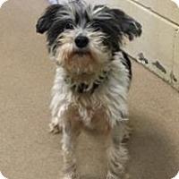 Adopt A Pet :: Jackson NJ - Barbi - New Jersey, NJ