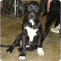 Adopt A Pet :: Wilbur - Braintree, MA