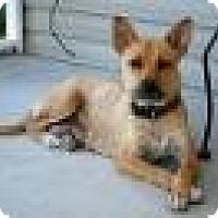 Adopt A Pet :: Layla-11 mos -sweetest dog! - Marlton, NJ
