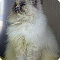Adopt A Pet :: Martha - Washington, VA