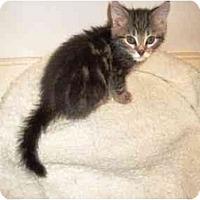 Adopt A Pet :: Mocha - Irvine, CA
