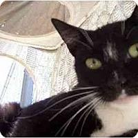 Adopt A Pet :: Mama Wonka - El Cajon, CA