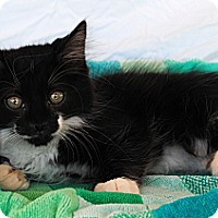 Adopt A Pet :: Boris & Marilyn - Palmdale, CA