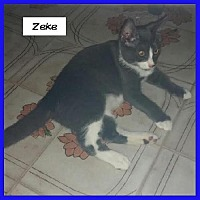 Adopt A Pet :: Zeke - Miami, FL