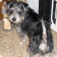 Adopt A Pet :: Rags - Huntsville, AL