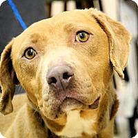 Labrador Retriever Mix Dog for adoption in Thomasville, North Carolina - Destiny