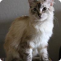 Adopt A Pet :: FancyFree - North Highlands, CA