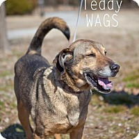 Adopt A Pet :: Teddy - Wagoner, OK