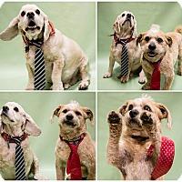 Adopt A Pet :: koda - Ogden, UT