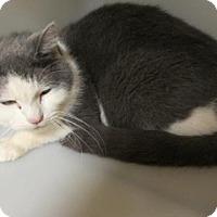 Adopt A Pet :: Louie - Cumming, GA