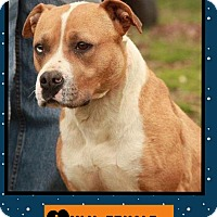 Adopt A Pet :: Lulu (reduced fee!) - Brattleboro, VT