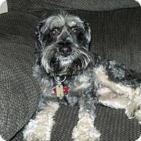 Adopt A Pet :: Walter - Homer, NY