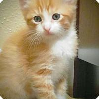 Adopt A Pet :: Xander - Arlington/Ft Worth, TX