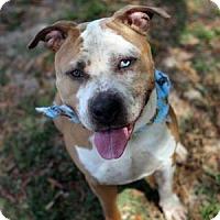 Adopt A Pet :: Titus - Lakeland, FL