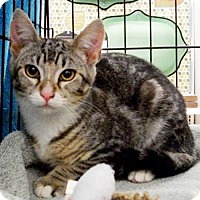 Adopt A Pet :: Ziggy - Castro Valley, CA