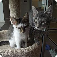 Adopt A Pet :: Sansa - Chambersburg, PA