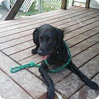 Adopt A Pet :: Cookie crunch TH - Tampa, FL