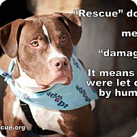 Adopt A Pet :: Elliott - Alexandria, VA