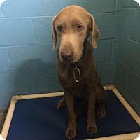 Adopt A Pet :: Charlie - Maysville, KY