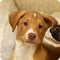 Adopt A Pet :: Sammy - Chicago, IL