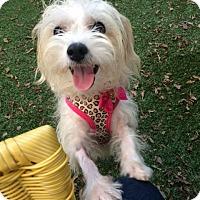 Adopt A Pet :: Salsa - MEET ME - Woonsocket, RI