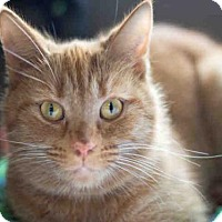 Adopt A Pet :: JEMIMA - Maumee, OH