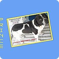 Adopt A Pet :: PRINCE - Dallas, NC