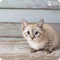 Adopt A Pet :: Amanda - Eagan, MN
