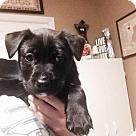 Adopt A Pet :: Kringle