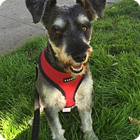 Adopt A Pet :: Rigby - West LA, CA