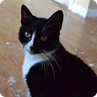 Adopt A Pet :: Oreo (@PetCo Bensalem) - Philadelphia, PA
