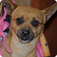Adopt A Pet :: Waldo - Meridian, ID