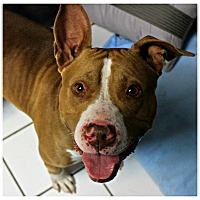 Adopt A Pet :: Kiffles - Forked River, NJ