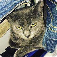 Adopt A Pet :: Giselle - New  York City, NY