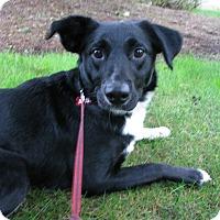 Adopt A Pet :: Misty - Salem, OR