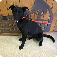 Adopt A Pet :: Rainey IN CT - Manchester, CT