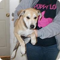 Adopt A Pet :: Hercules - Lewisburg, TN