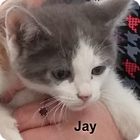 Adopt A Pet :: Jay - Germantown, MD
