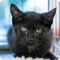 Adopt A Pet :: Alexis - New York, NY