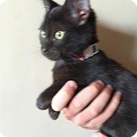 Adopt A Pet :: Fortuna - Colorado Springs, CO