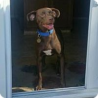 Adopt A Pet :: Blaze - Marlton, NJ