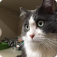 Adopt A Pet :: Thistle - Fort Collins, CO