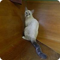 Adopt A Pet :: Sansa - Randleman, NC