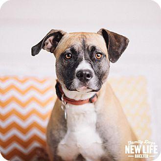 Australian Cattle Dog Mix Dog for adoption in Portland, Oregon - Jo
