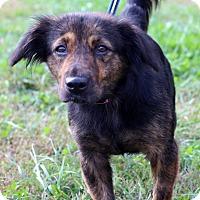 Adopt A Pet :: Sidney - Waldorf, MD