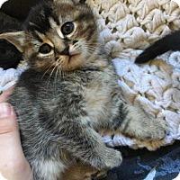 Adopt A Pet :: Gilda - Lockport, NY