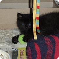 Adopt A Pet :: Aspen - Orland Park, IL